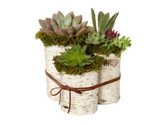 Potted succulents make for a perfect centerpiece any time of the year #hgtvmagazine #DIY // http://www.hgtv.com/design/make-and-celebrate/entertaining/5-ingredient-or-less-diy-centerpieces-pictures?soc=pinterest