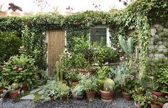 Delightful north facing garden design ideas - The Planthunter Plant Life A Tiny Brunswick Garden. Little Gardens, Small Gardens, Outdoor Gardens, Raised Gardens, Courtyard Gardens, Garden Cottage, Garden Pots, Home And Garden, Potted Garden