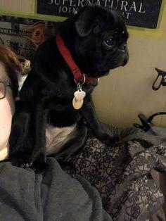 Life with a pug https://ift.tt/2GYGRga