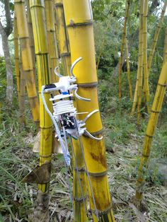 "A robot named ""Treebot"", developed by the Chinese University of Hong Kong, climbs upbanboo. Treebot has two grippers that dig into bark and allow the device to wriggle up a tree like a caterpillar. It weighs less than 1 kg (2.2 lbs), can carry a camera and is designed to climb trees in place of humans, to perform health checks, reported the South China Morning Post."