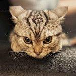 The Skyrim Cat :)