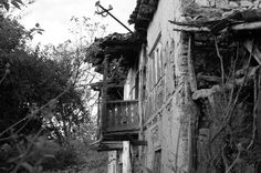 leaved house