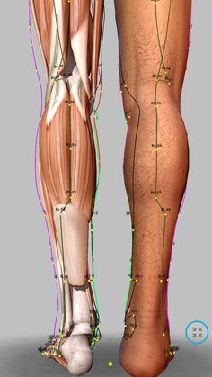 Meridian Acupuncture, Acupuncture Points, Acupressure Points, Acupressure Therapy, Acupressure Treatment, Human Body Anatomy, Reflexology Massage, Medical Anatomy, Traditional Chinese Medicine