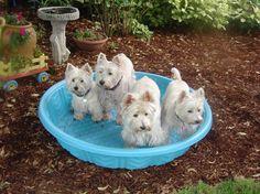 The Terrier Club - Photo Detail