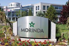 Compania Morinda
