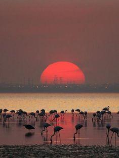 Flamingos sunset                                                                                                                                                                                 Más