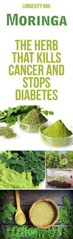 Have you heard about MORINGA? Read about all the benefits of this miraculous herb!