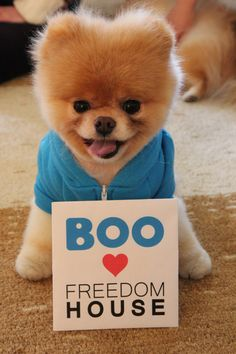 Boo the dog visits Freedom House