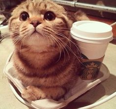 thank you, coffee cat!