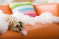 How to Make All-Natural Dog Deterrent thumbnail
