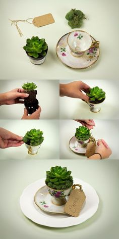 DIY: succulent vintage teacup wedding favor idea If I can get him to do an Alice in Wonderland-esque theme...