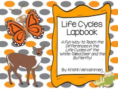 Are+your+students+learning+about+the+life+cycles+of+the+white-tailed+deer+and+the+butterfly?++This+lapbook+compares+and+contrasts+the+life+cycles+of+these+two+species.++The+lapbook+includes+the+following:*+Flipchart+with+notes+about+each+stage+of+the+white-tailed+deer.