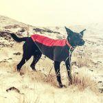 Dé Hondenjas Gids Voor De Beste Hondenjas  https://www.dehondenwereld.nl/de-hondenjas-gids-voor-de-beste-hondenjas/