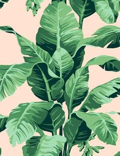 Pacifico Palm Removable Wallpaper - Peach