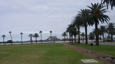 Palm trees at Swan River foreshore Perth