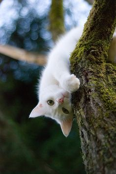 Just Hanging Around | White cat