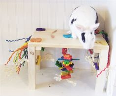 Fight boredom and keep your pet bunny enterained with these safe and fun rabbit toys. From destroyable shredders and wood chews to puzzle toys to stimulate their curiosity. Rabbit Life, House Rabbit, Rabbit Toys, Bunny Rabbit, Diy Bunny Toys, Rabbit Behavior, Bunny Room, Indoor Rabbit, Bunny Cages