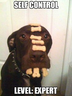 I have zero self control when it comes to tastey treats. I could learn a thing or two from this dog.