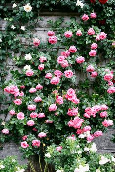 My Grandma Boyajian had trellis roses all over her porch and to this day when I smell them I think of her.