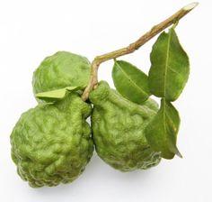 Photo: paikeow/pixabay.com Tempura, Bergamot, Stuffed Peppers, Vegetables, Pork Dishes, Herbs, Peppermint Tea, Lemon Grass, Thai Basil