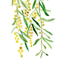 Mimosa print of original watercolor painting by TheJoyofColor, $21.00