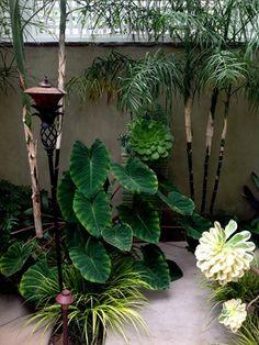 Tropical Landscape Design Ideas, Pictures, Remodel and Decor