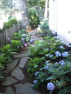 Traditional Landscape/Yard with Hydrangea, Natural stone pathway, Western Sword Fern, Fence, Pathway