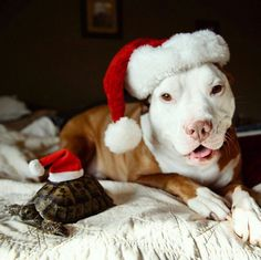 They terrorized our nation's turtles: | 26 Reasons Pit Bulls Were The Most Dangerous Animal In 2015