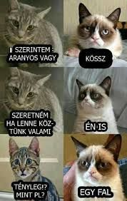 Do you love Grumpy cat. If you do, These Grumpy cat Memes work for you.These Grumpy cat Memes work are so funny and humor. Grumpy Cat Quotes, Funny Grumpy Cat Memes, Cat Jokes, Funny Cats, Grumpy Kitty, Funny Cat Quotes, Grumpy Car, Funny Cat Pics, Grumpy Cat Birthday