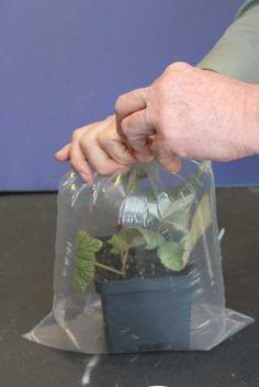 Propagating Plants by Cuttings