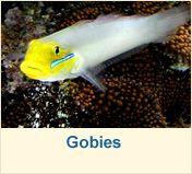 Salt Water Fish | Marine Life | Tropical Fish | Reef Fish & Salt Water Tank Fish