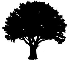 tall tree and man silhoette | silhouette of oak tree tree silhouettes