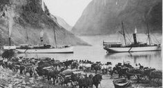 """A busy summer's day at Gudvangen, with Fylkesbaatane i Sogn og Fjordane's local steamer Sogn alongside the quay on the far left and a huge gathering of carioles waiting to take cruise passengers up to the hotel at the top of the Stalheim pass. Of the two Nordenfjeldske steamers, the one on the left is Ragnvald Jarl, while the one on the right is either Sigurd Jarl or Kong Harald."" (unknown date) Via Mike Bent"