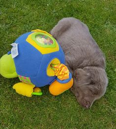 Balou the bear cuddled up