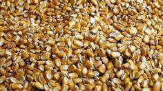 Si chiamano aflatossine. Si trovano nel mais. Nel latte nei formaggi, nelle noccioline, nelle spezie. Sono molto dannose, persino cancerogene. E' questo