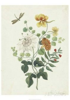 Simply Divine, Vintage Botanical Illustration Art Print by itaya Art And Illustration, Floral Illustrations, Botanical Illustration, Vintage Botanical Prints, Botanical Art, Book Flowers, Poster Prints, Art Prints, Posters