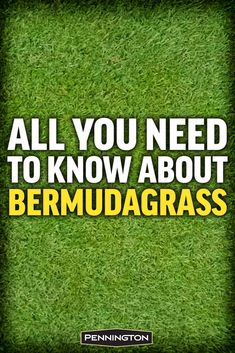 All You Need to Know About Bermudagrass hashtags