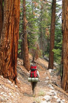 "Sequoia National Park. Photo by Miguel Vieira. Click through for full article on ""North America: Spectacular West Coast Destinations to Visit Before You Die"" ----> http://www.mappingmegan.com/north-america-10-spectacular-west-coast-destinations-to-visit-before-you-die/"