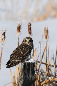 Owl Bird Winter Tree Stump Mobile Wallpaper - Mobiles Wall