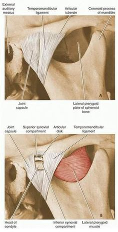Dentistry lectures for MFDS/MJDF/NBDE/ORE: Anatomy of Temporomandibular Joint.....with TMJ Anatomy Video.