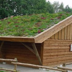 Het dak op met sedum, mos en kruiden. Begin gewoon eens met het schuurtje of de carport. | Groendak