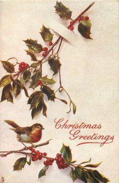 Christmas Greetings ~ holly & mistletoe, robin