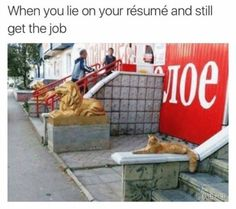 Enjoy the meme 'When you lie about your resume bu still get the job' uploaded by TaylorP. Memedroid: the best site to see, rate and share funny memes! Memes Of The Day, New Memes, Funny Cat Memes, Meme Meme, Stupid Memes, Memes Humor, Chat Lion, Lion Cat, You Lied