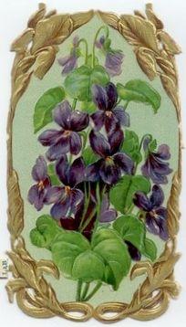 Old scrap-Violets