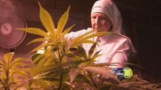 "A group of Merced City nuns are fighting for their right to grow medical marijuana. The ""Sisters of the Valley,"" who grow medical cannabis crops in order to produce salves and tonics concentrated w..."