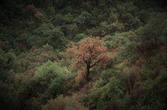 Istán, Andalucia