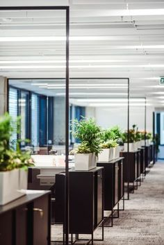 Beautiful Office Plants Without the Worry – Cool Office Space Open Space Office, Bureau Open Space, Glass Office, Office Space Design, Office Interior Design, Office Designs, Office Open Plan, Corporate Office Design, Corporate Interiors