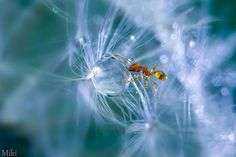 Exceptional Photos Of Macro World Captured By A Japanese Photographer | Top Design Magazine - Web Design and Digital Content