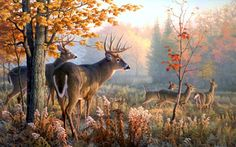 deer hd wallpapers 1080p quality painting whitetail widescreen