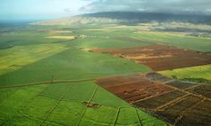 Petition Launched to Halt GMO Production, Pesticide Use in Hawaii | EcoWatch